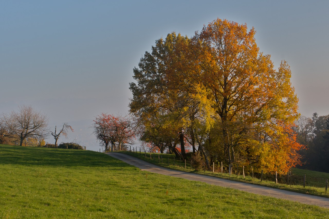 Autumn trees • Towards the summit of Mont Vully.