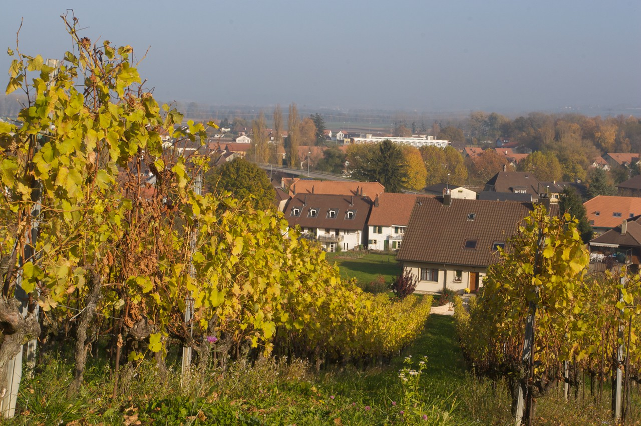 Sugiez • Looking towards the small town of Sugiez from the vineyards which are located at the base of Mont Vully.