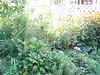 garden beauty July 31st 2007