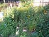 garden July 2007