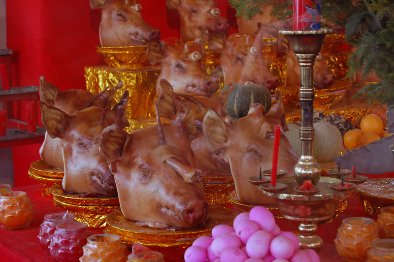 Swine shrine