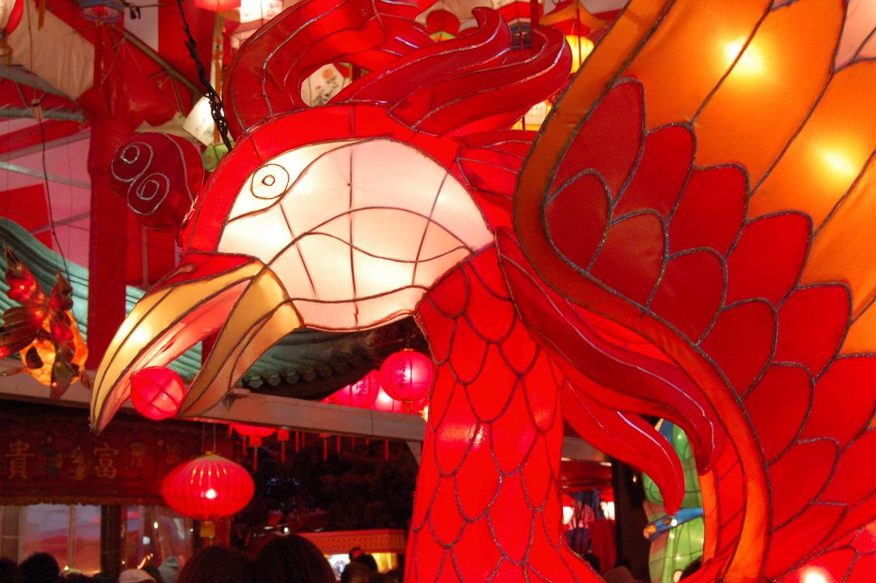 Lantern phoenix
