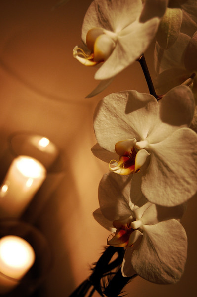 Orchid Blossoms In Candlelight