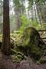Mosses on a rock near Lower Lena Lake.