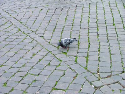 A Roman pigeon!