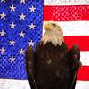 As Patriotic As Possible