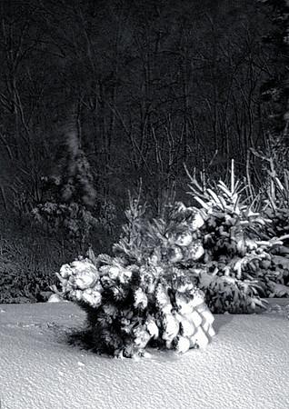 First Snow - Nov. 2007