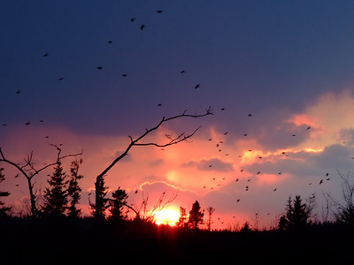 ... and the crows joined in