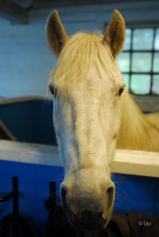 Men en så här trevlig häst fick han.