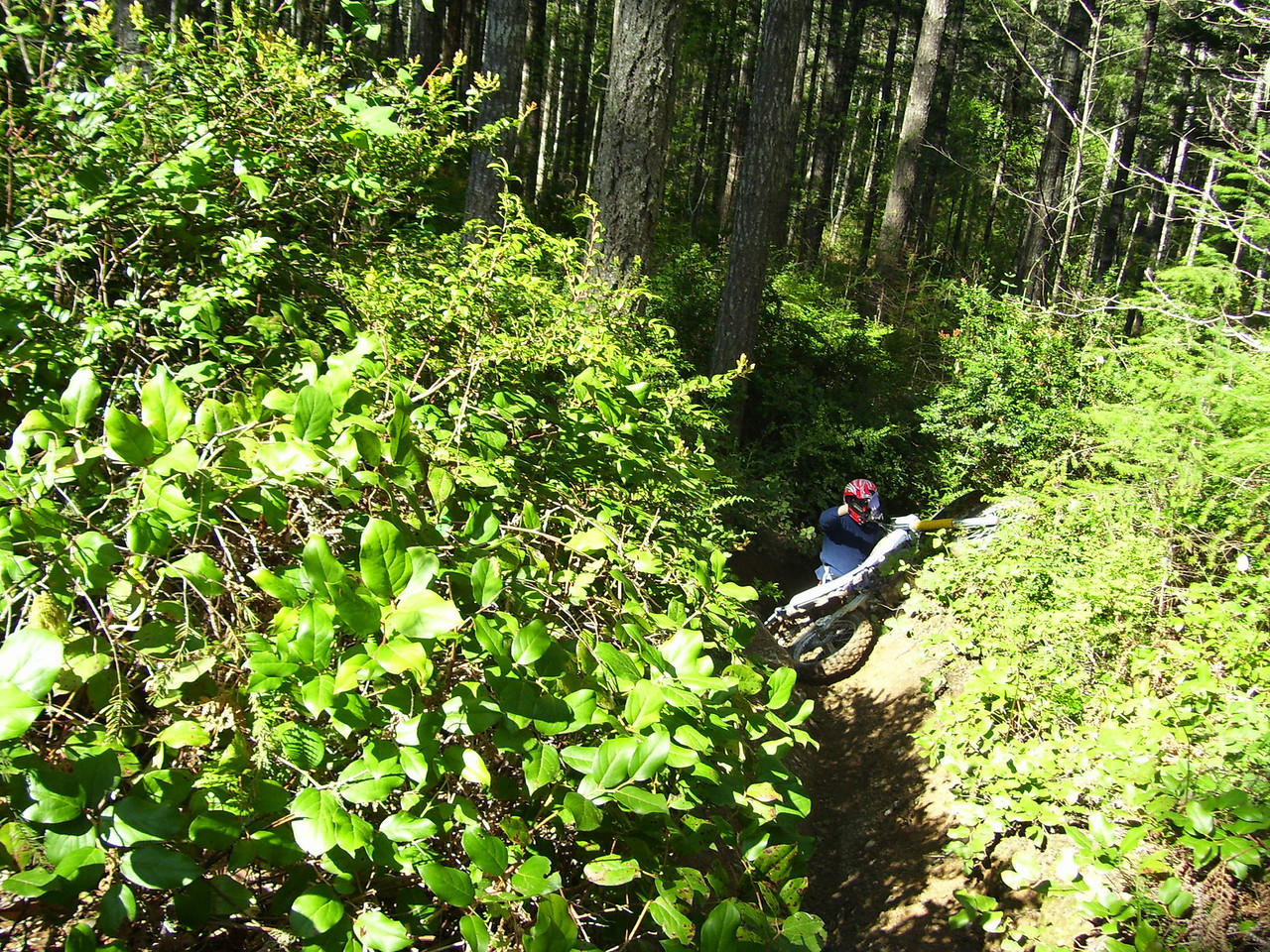 "Danny trying to get his DR 350 up this nasty little ""V"" shaped ditch of a trail."