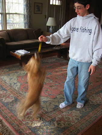 Jumping to get his favorite toy from mean Ben