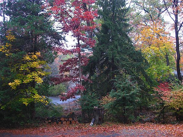 Trees outside the house
