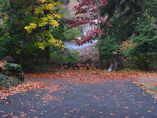 Our driveway, looking from the garage