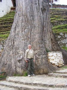 Lincoln Hollister and Cyprus Tree - Mibs Mara