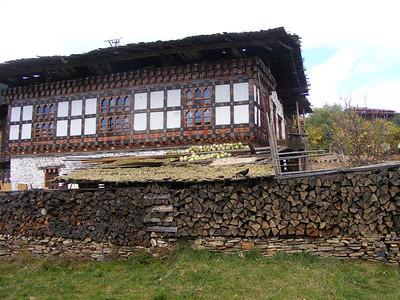 Cabbage Roof in Village of Shingkar - Mibs Mara