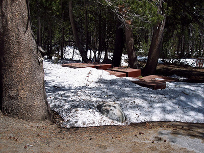 Buried bear boxes at Sunrise Lakes Trailhead.