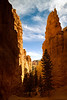 base of hoodoos navajo trail bryce canyon utah