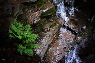 Fern and Falls