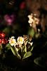 monasterio flowers cusco