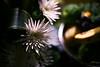 flower monasterio cusco peru