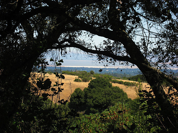 Bay Area through trees at Windy Hill