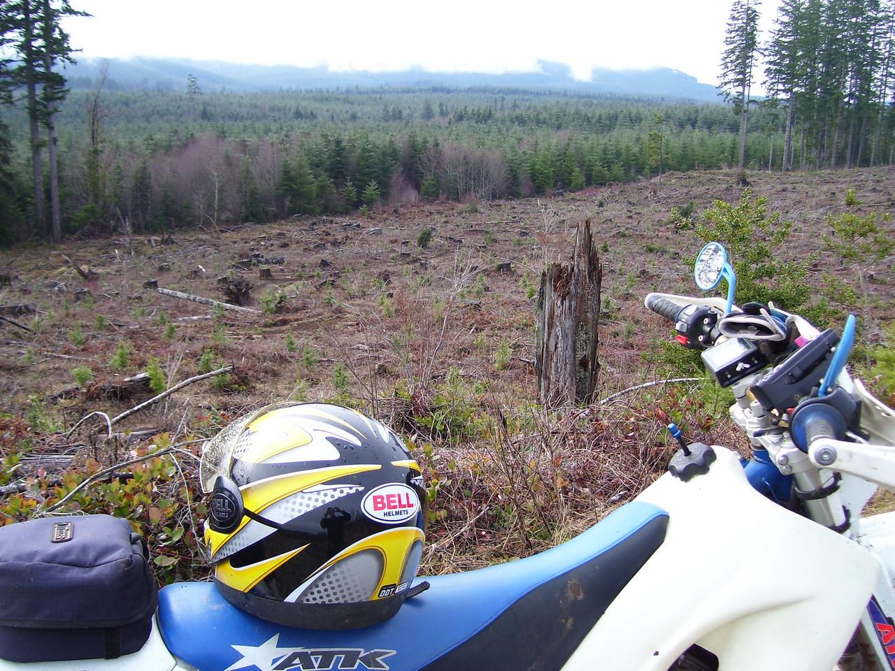 Trail through the clear cut.