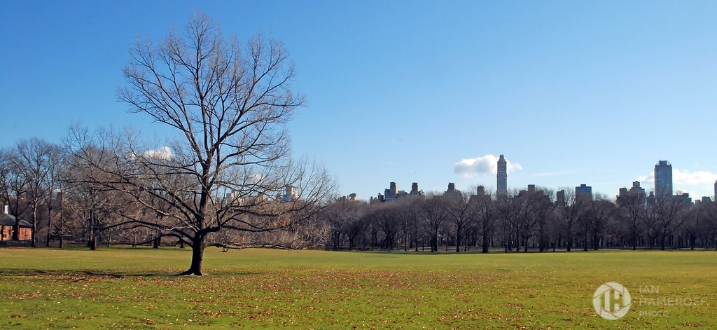 Tree, Leaves in Central Park