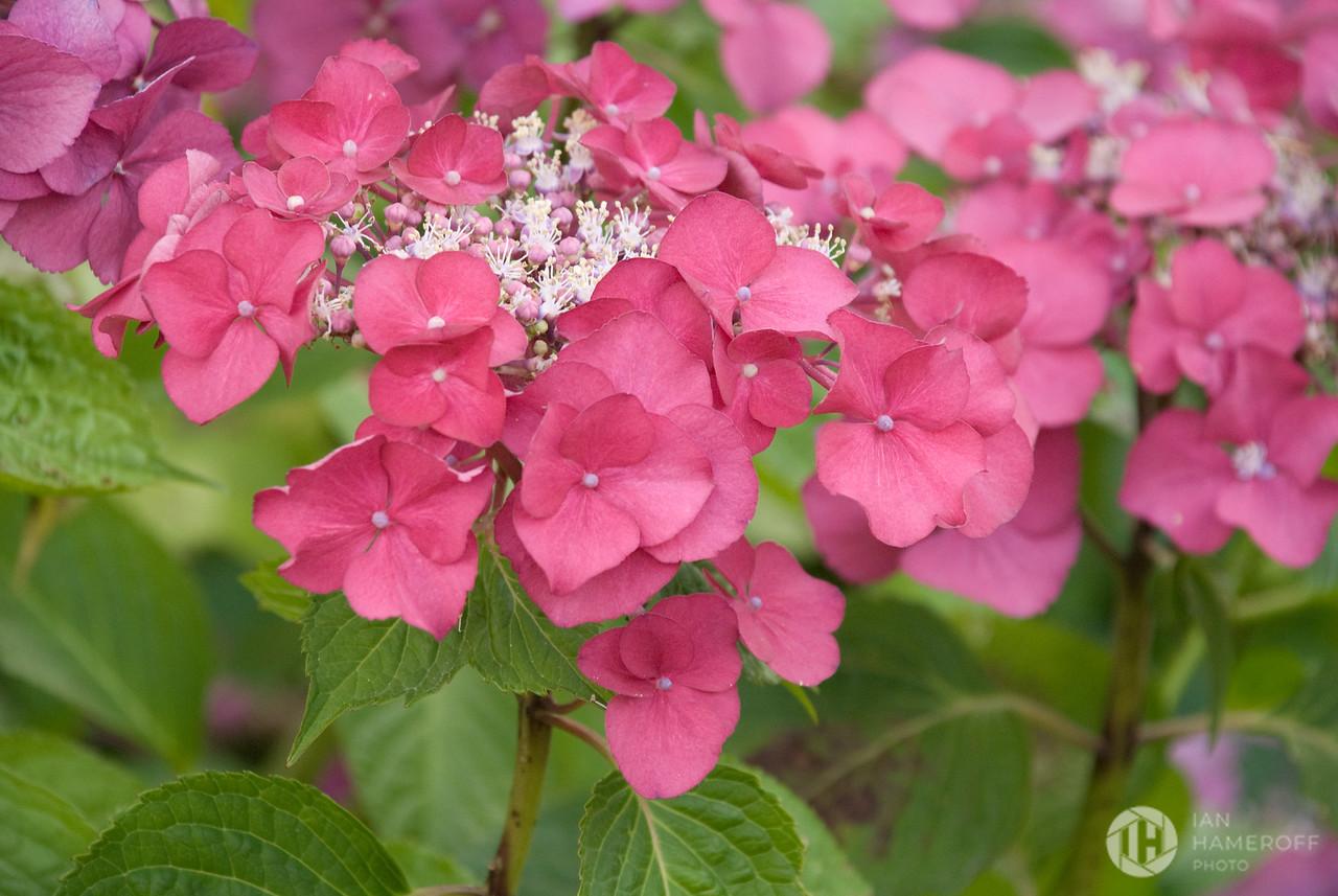 Wilburton Flowers
