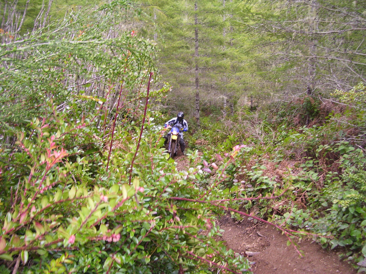 The last Trail, just Mark and I on part of the Sparkplug Enduro route. This was a nasty 1/4 mile climb.