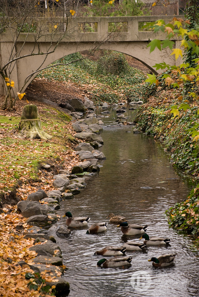 Bridge, Leaves, Ducks, Stream