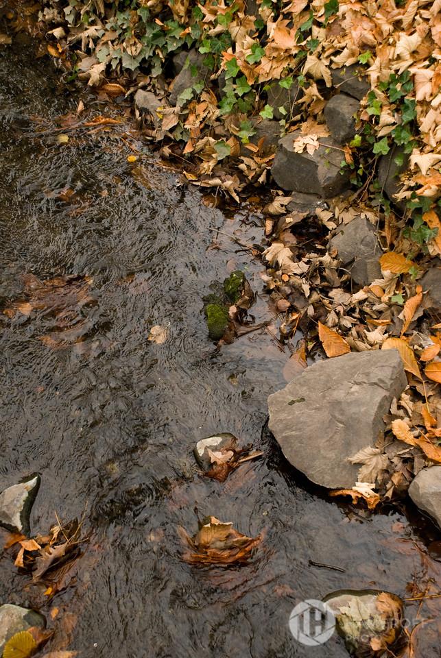 Leaves of Brook