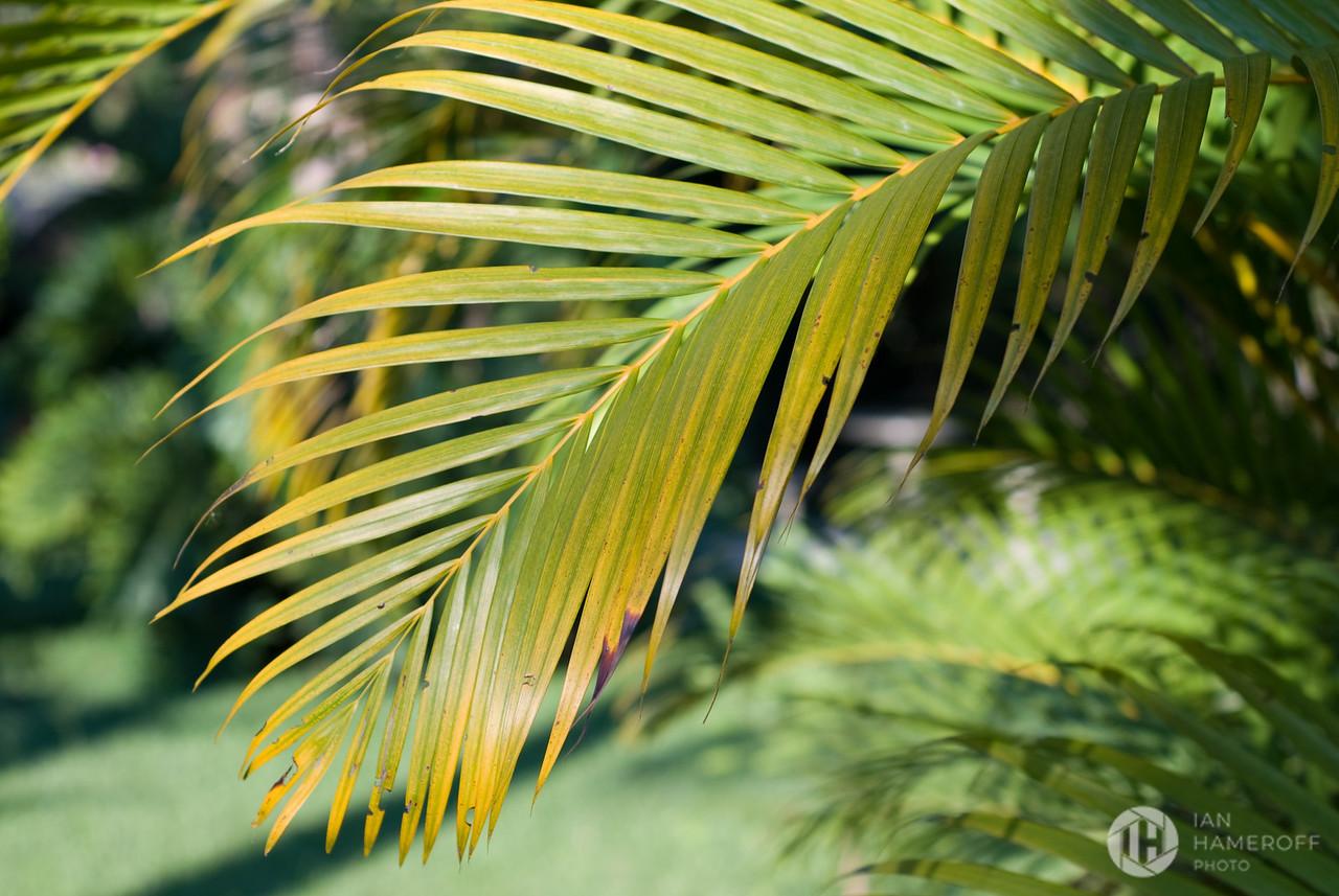 Palm Desktop