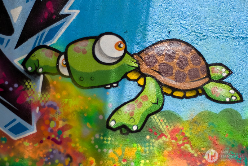 Alley Terrapin