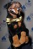 Animal Care Affair Gala, New York, USA