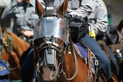 Police horse with protective gear, on duty at the 2008 Democratic National convention in Denver.