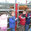 Jaedon and Cameron lookin' at the cow
