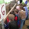 Looking at Sheep