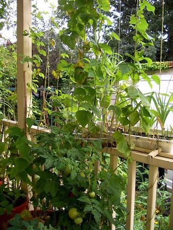 2008 08 Garden