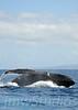 2008 Maui Whales (8)