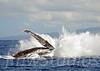 2008 Maui Whales (13)
