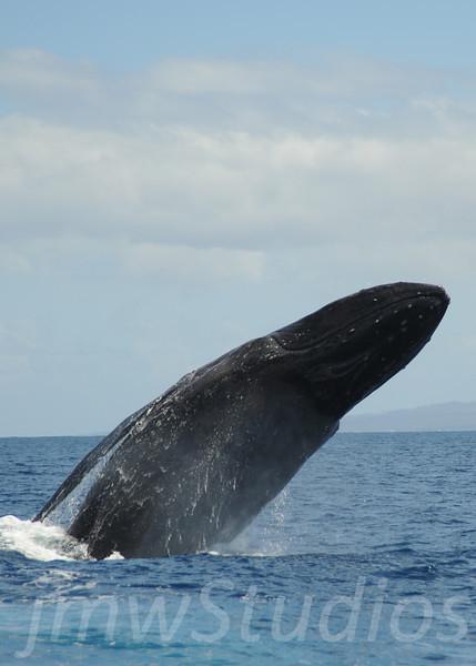 2008 Maui Whales (7)