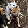 Isabella, Foxi, Maddie_00001