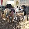 BUD, EUBIE, Isabelle, oliver