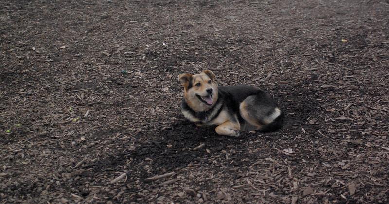 Maddie ( no digging)