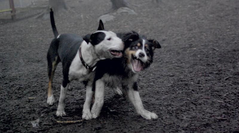 OLIVER & BUD