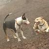 LUCY & BUD