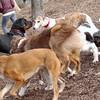 Chase (greyhound), Eubie