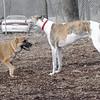Honey & Chase (greyhound) laugh