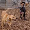 Buddy (lab pup), Reggie