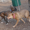 charlie (girl) w. Buster new young boxer